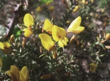 Flores que escollen aos seus polinizadores