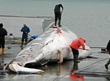 Biólogos-CEMMA-presentan-documental-investigación-caza-balea-IEM-Gondomar