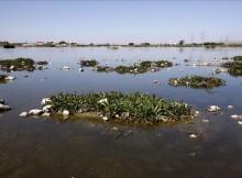 Botulismo-trampa-mortal-humidais-Rede Natura 2000