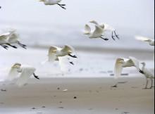 Xunta-organiza-curso-seis-días-formar-técnicos-ambientais-sobre-turismo-sostible-illas-atlánticas-co-fin-achegar-espazo-natural-cidadáns