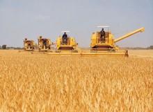 demanda-global-alimentos-aumentaría-enerxía-auga-segundo-informe-publicado-Panel-Alto-Nivel-Sustentabilidade-Global-designado-ONU-aumento-poboación-mundial-Diversos-estudos-FAO-OCDE-IICA