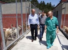 concellos-adheridos-CAAN-aforran-64 %-servizo-recollida-animais-abandonados-Deputación-Pontevedra-Meis