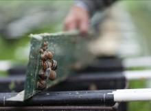 Red-Natura-produción-ecolóxica-atrapa-mocidade-emprendedora-caracois-Bizcaia