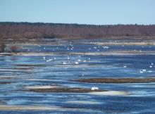 gobernos-nórdicos-piden-maior-protección-turberas-amortiguadores-cambio-climático