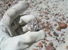 Patagonia-era-verxel-fai-20-millóns-anos