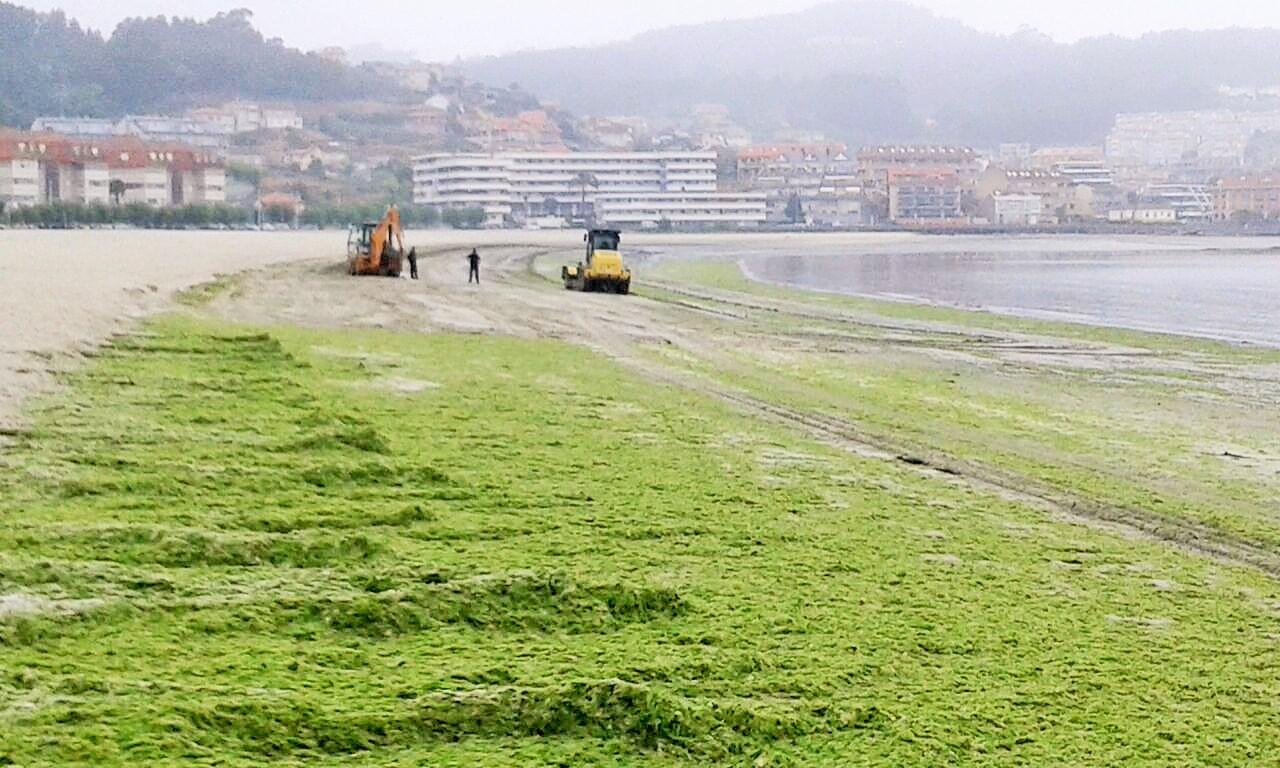 Concello-Baiona-retira-algas-Praia-Ladeira