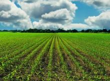 Sustentabilidade-Estratexias-recuperar-fertilidade-chans-agrícolas
