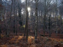 bosques-autoctonos-aliados-contra-o-cambio-climatico