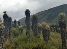 boyaca-conta-con-dous-novos-parques-naturais-rexionais