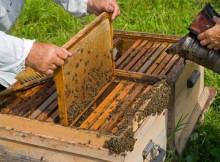 o-ministerio-de-agricultura-alimentacion-e-medio-ambiente-publica-a-convocatoria-de-subvencions-para-promover-a-investigacion-no-sector-apicola