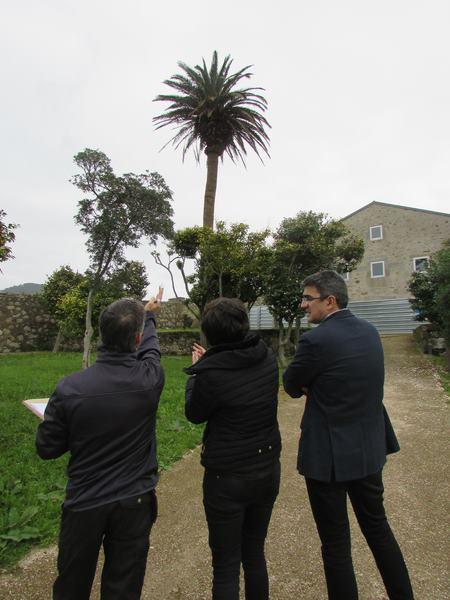 a-guarda-estuda-un-plan-de-prevencion-para-as-palmeiras-non-afectadas-polo-picudo-e-para-rehabilitar-exemplares-enfermos