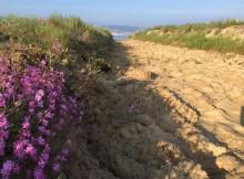 ecosistema-dunar-de-praia-america-nigran-en-condiciones-de-que-sexa-declarado-espazo-natural-de-interese-local