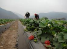 67-millons-de-persoas-vironse-afectadas-en-america-latina-polos-desastres-no-sector-agricola