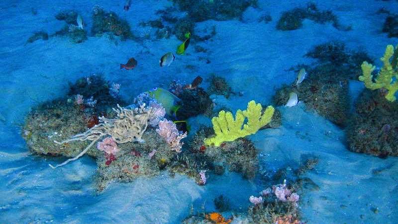 un-robot-acuatico-de-greenpeace-consegue-as-primeiras-e-ineditas-imaxes-dun-coral-unico-escondido-no-amazonas