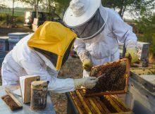 os-insecticidas-usados-en-europa-suponen-maior-risco-para-as-abellas-e-outras-especies-do-que-se-pensaba