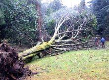 o-castelo-de-soutomaior-permanecera-pechado-indefinidamente-tras-os-numerosos-danos-ocasionados-polo-temporal