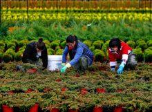 unha-vintena-de-profesionais-da-xardineria-visitaran-os-viveiros-tomineses