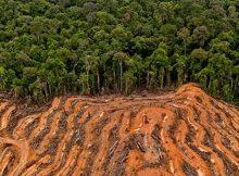 o-parlamento-europeo-sinala-ao-aceite-de-palma-como-unha-das-principais-causas-de-deforestacion-do-planeta