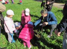 nenos-e-nenas-da-escola-infantil-municipal-da-guarda-plantaron-arbores-xunto-ao-castelo-de-santa-cruz