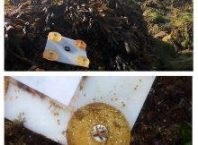 as-rias-atlanticas-actuan-como-refuxios-microclimaticos-para-determinados-tipos-de-algas