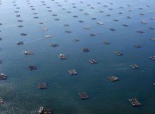 a-acuicultura-fonte-de-recursos-azuis-e-de-empregos-verdes
