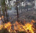 choiva-despois-dos-incendios-medidas-urxentes-evitar-contaminacion-da-auga
