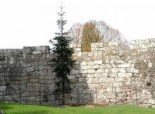 xardin-botanico-castelo-soutomaior-acolle-duas-novas-especies-arbores