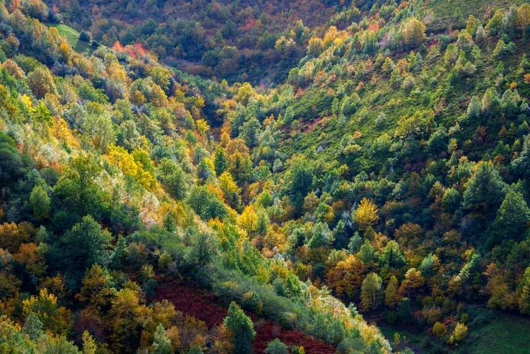 diario-oficial-galicia-publica-as-axudas-medio-rural-accions-silvicolas-prevencion-nos-montes-galicia