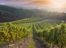 feira-do-vino-do-rosal-aumenta-sua-relevancia-nomeada-festa-interese-turistico-autonomico