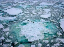 greenpeace-comeza-unha-expedicion-historica-reclamar-creacion-da-maior-area-protexida-do-mundo-santuario-antartico