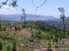 novo-proxecto-da-ee-forestal-incorpora-drones-aos-traballos-estudo-e-conservacion-do-cabalo-galego-do-monte