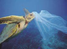 asociacions-ecoloxistas-demandan-reducir-o-consumo-de-bolsas-de-plastico-ante-a-entrada-en-vigor-dun-real-decreto-insuficiente