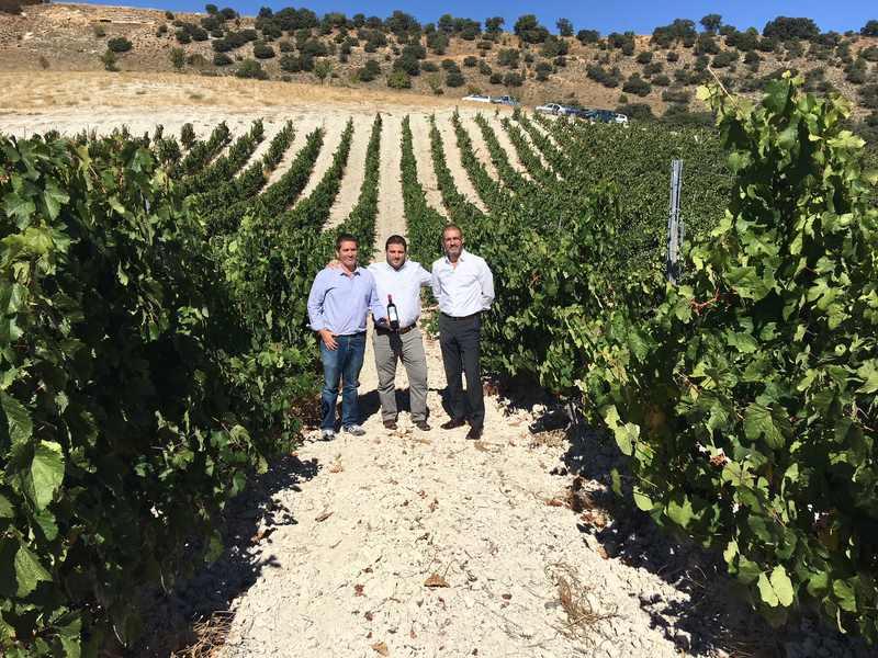 O Grupo Terras Gauda reafirma a súa aposta pioneira pola viticultura biodinámica e a sustentabilidade