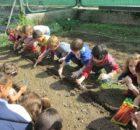 Amigos da Terra pon en marcha unha Rede de Hortas Ecolóxicas Escolares