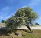 'Cuadernos de la Sociedad Española de Ciencias Forestales' publica un artigo sobre o Catálogo de Árbores Senlleiras de Tomiño