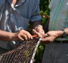 A Deputación de Pontevedra promoverá a recuperación do patrimonio inmaterial galego-portugués a través da iniciativa `O Miño: un río de tesouros'