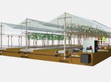 Suministros Río Verde amosará na 16ª Mostra de Cultivos o primeiro sistema de cultivo hidropónico de kiwi do mundo