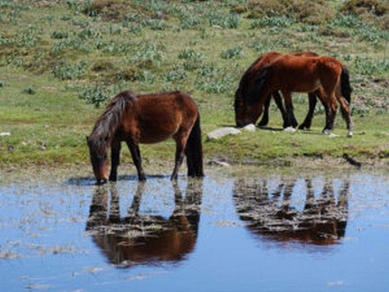 """""""Polos cumes da Groba. O hábitat do último cabalo salvaxe do mundo"""". Nova Xeira do IEM en Baiona"""