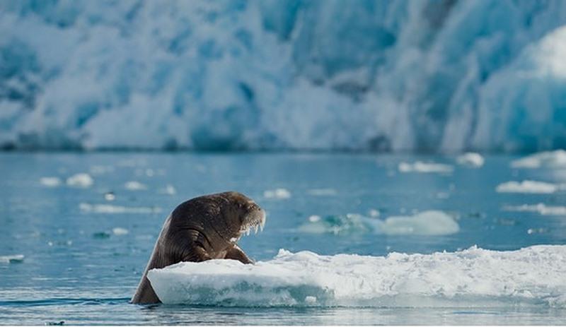 A crise climática, unha crise para os océanos
