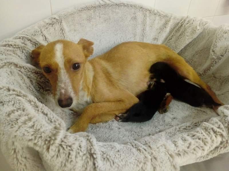 Ánxela e Mara recupéranse no CAAN tras seren rescatadas dun colector do lixo en Cuntis