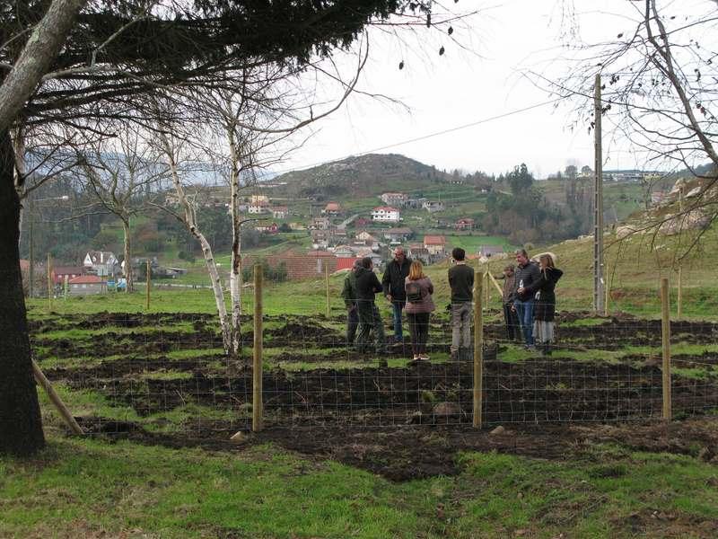Un proxecto experimental coloca unha plantación de froitos do bosque a unha parcela de monte recuperada de Chandebrito tras os incendios