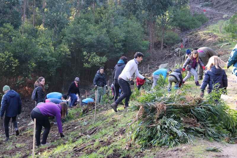 """Andaina e reforestación do Camiño Portugués da Costa co proxecto """"O Camiño Aguárdate"""""""