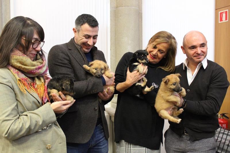O Centro de Acollida e Protección de Animais (CAAN) da Deputación de Pontevedra pecha un 2019 de récord con 466 adopcións