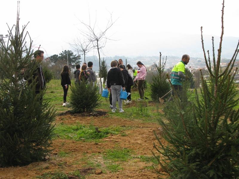Escolares de Nigrán plantan 30 abetos recollidos na primeira campaña municipal de Nadal para a súa reutilización