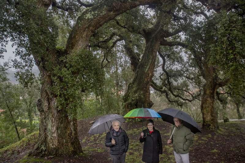 O Rosal solicitará incluír as sobreiras da Ermida da Madalena no Catálogo de Árbores Senlleiras de Galicia