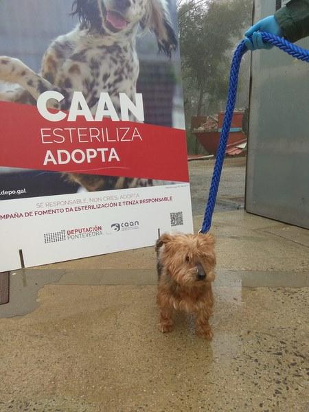 """Arranca a campaña """"Abraza un CAAN"""" para seguir a promover a adopción e tenenza responsable de animais"""