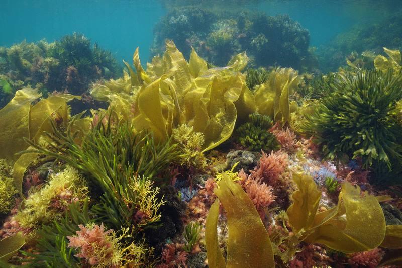 Galicia desenvolve solucións para o uso de algas como abono orgánico que contribúa á rexeneración ambiental