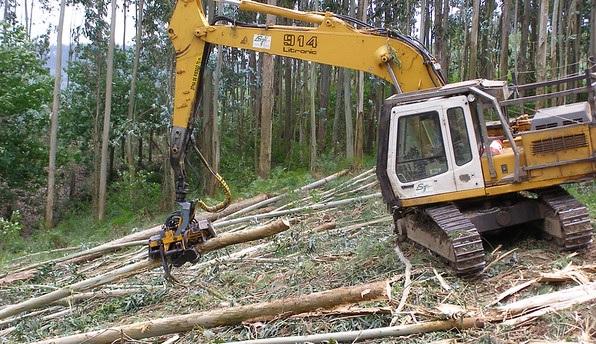 A proposta de moratoria da Xunta de Galicia abre a porta ao fin da conflitividade das plantacións de eucalipto