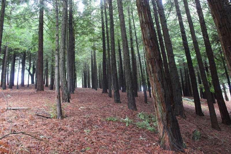 O Centro de Investigación Forestal de Lourizán pon en valor o seu material xenético para avanzar na prevención de doenzas e para anticiparse ao cambio climático