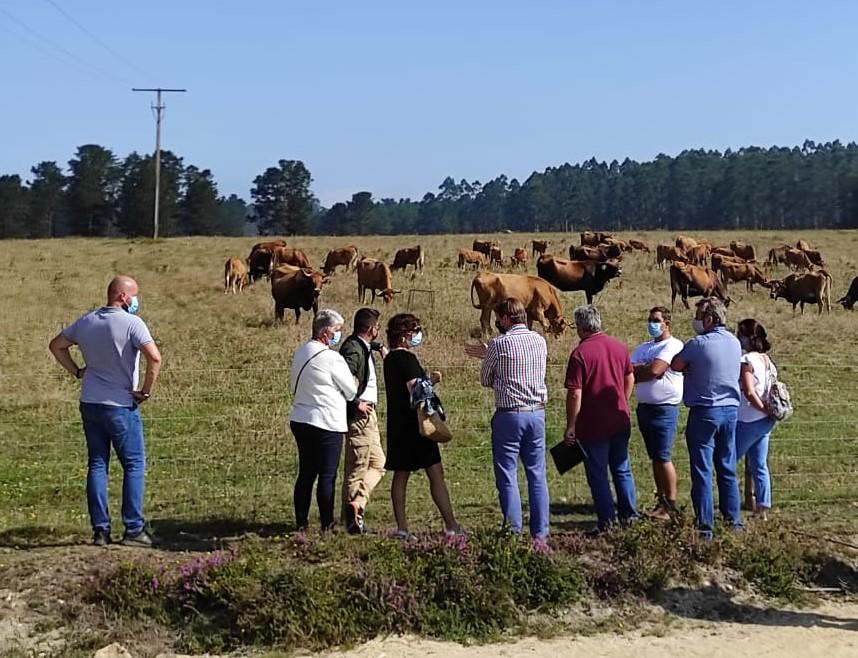 """""""As vaquiñas de Pinzás"""" un exemplo da xestión sostible e rendible do monte"""
